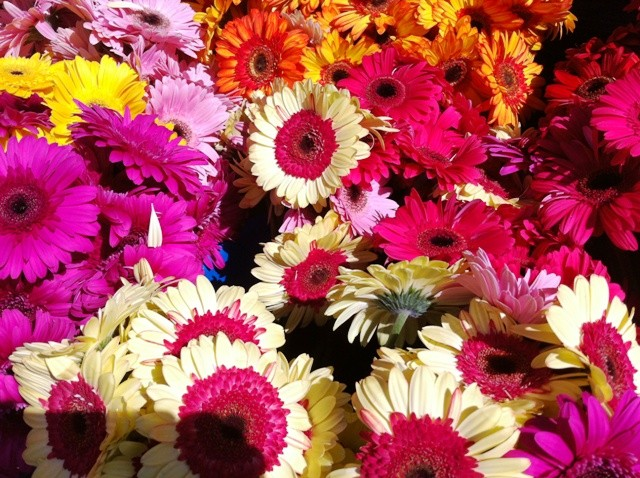 How Playing with Flowers Affects Our Well-Being